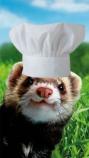 Ferret chef